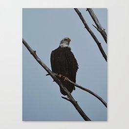 Spring Eagle Canvas Print