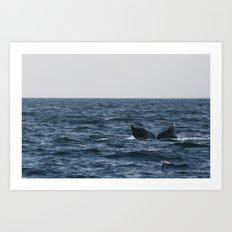 humpback whale tail Art Print