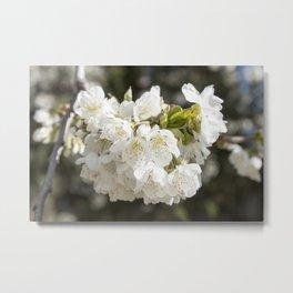 White Flowers Photography Print Metal Print