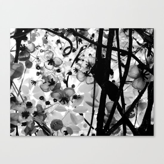The Chocolate Vine Canvas Print