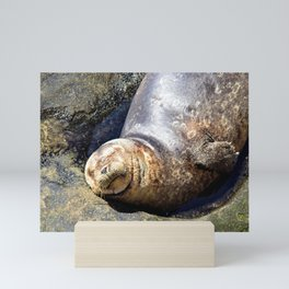 Smiling California Seal Makes Me Smile by Reay of Light Photography Mini Art Print