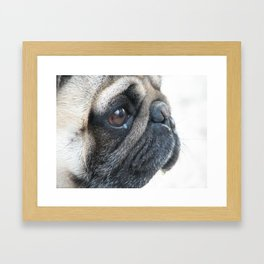 Pug dog thinks of home Framed Art Print