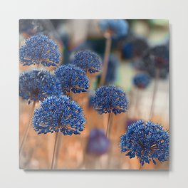 Blue ball flowers Metal Print