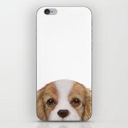 Cavalier King Charles Spaniel Dog illustration original painting print iPhone Skin
