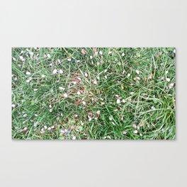 Petals on the grass Canvas Print