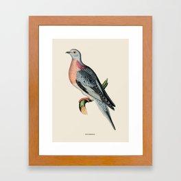 Pigeon Antique Naturalist Illustration Framed Art Print