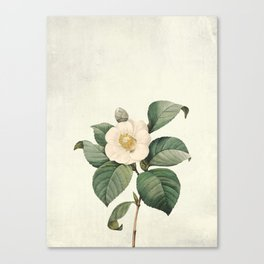 Vintag flower patter1 Canvas Print