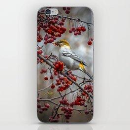 Pine Grosbeak iPhone Skin