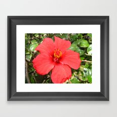 Tropical Flower Red Framed Art Print