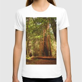 Muir Woods Walkway T-shirt