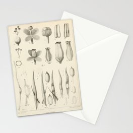 Vintage Scientific Print - 1824 - Monkey Cups Stationery Cards