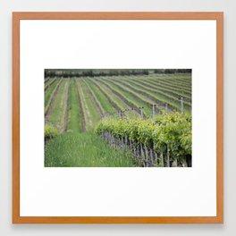 Vineyard Spring Framed Art Print