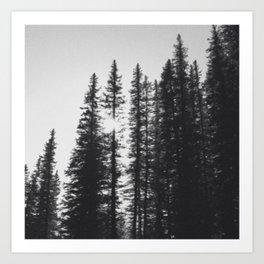 Contrast Forest Art Print