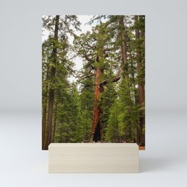 """Grizzly Giant"" Sequoia Tree, Yosemite National Park Mini Art Print"