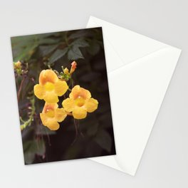 Longwood Gardens Autumn Series 199 Stationery Cards