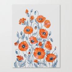 Poppies botanical art Canvas Print