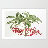 spice Art Prints featuring Spice Berry  by taiche