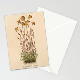 1800s Moss Lithograph Splachnum Luteum Stationery Cards