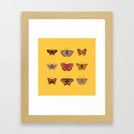 Butterflies Mounted on Yellow Framed Art Print