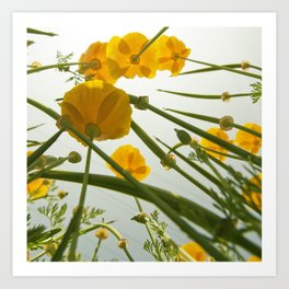 Looking Through Yellow Daisies to the Sky Art Print