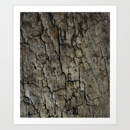Sleep on wood 2 Art Print