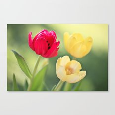 Red & Yellow Tulips Canvas Print
