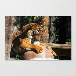 The Tiger Triumphant Canvas Print