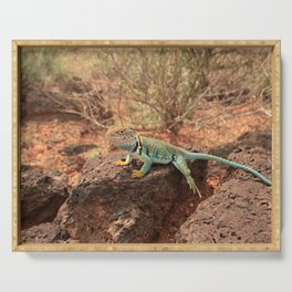 Collared Lizard Resting on the Rocks in Arizona Serving Tray