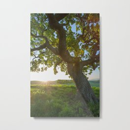 Morning In Danville Metal Print