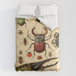 Popular History of Animals Beetles Vintage Scientific Illustration Educational Diagrams Comforters