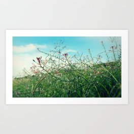 Field Wild Flowers Art Print