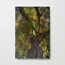Balboa Park Tree Metal Print