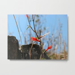 Flower Of Sacsayhuaman Metal Print