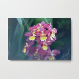 Longwood Gardens Orchid Extravaganza 65 Metal Print