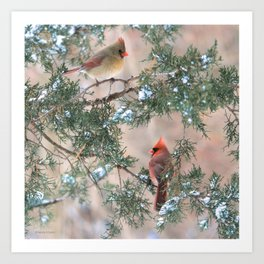 Winter Pair Cardinals (sq) Art Print
