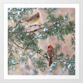 Winter Pair Cardinals (sq) Art Print