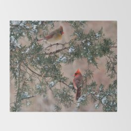 Winter Pair Cardinals (sq) Throw Blanket
