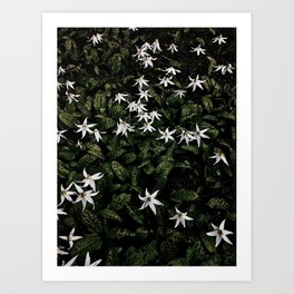 White Fawn Lilies; Open Your Heart Art Print