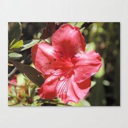 Jardín Botánico de Quito, Tres Canvas Print