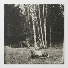 elegant creatures Canvas Print