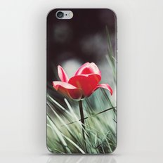 Red Tulip Flower Photography, Floral Green Grass, Red Nature Botanical Art iPhone & iPod Skin