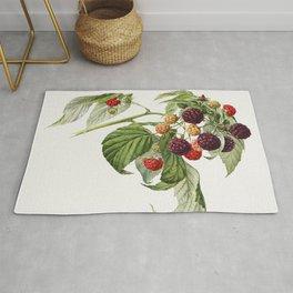 Purple Raspberry (Rubus Xneglectus) (1918) by Royal Charles Steadman Rug