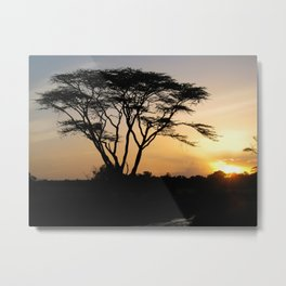 Fever tree sunset Metal Print