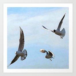 Three Black Headed Gulls Of The Bosphorus Art Art Print