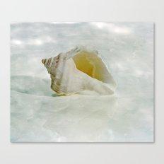 White Seashell Canvas Print