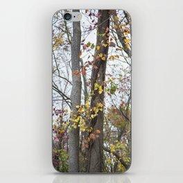 Autumn Trees 2 iPhone Skin
