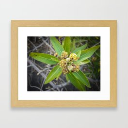 Flowers Blooming Some Are Not Framed Art Print