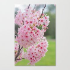 Pink is my signature color. Canvas Print