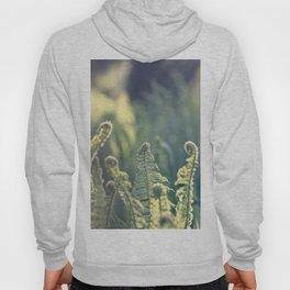 Polypodium vulgare fern plant Hoody