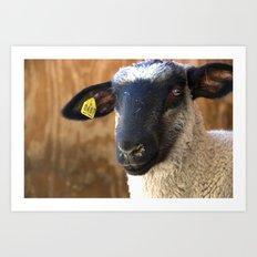 Lamb #0487 Art Print